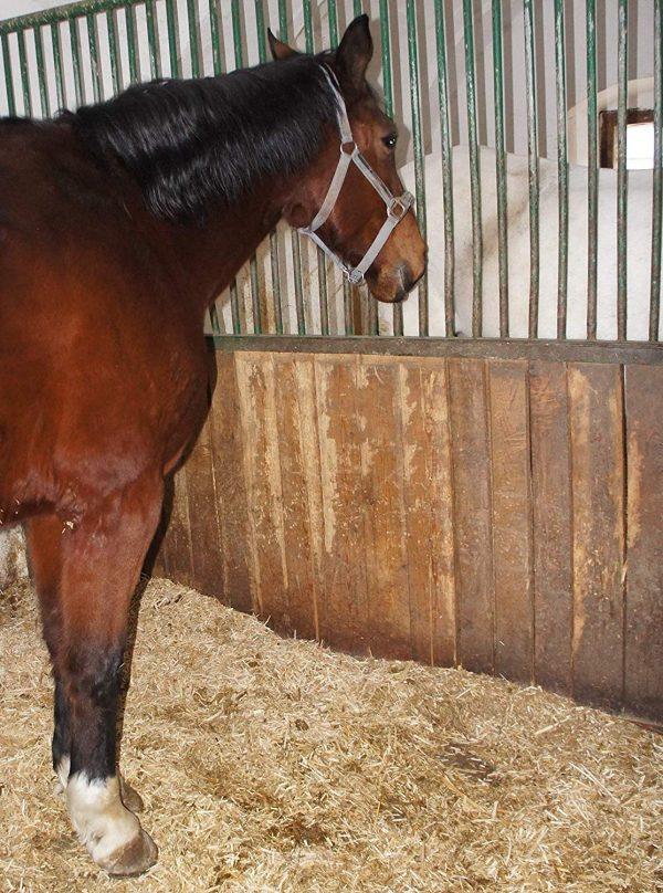 Miscanthus Häckselgut als Einstreu in Pferdebox