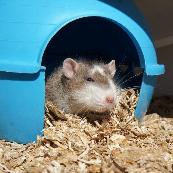Einstreu Snips für Kleintiere