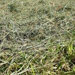 Qualitäts-Kleintier Heu bei der Ernte